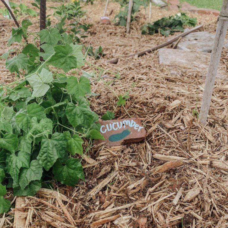 garden, stones, labels, diy